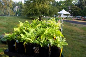 Scott Arboretum Plant Sale, Swarthmore College.